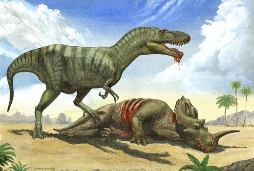 A Gorgosaurus libratus stands over the dead body of a Centrosaurus. : Stock Photo