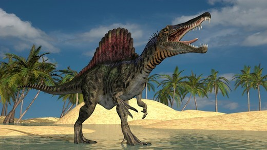Stock Photo: 4239R-7693 Spinosaurus hunting for its next meal in shallow waters.