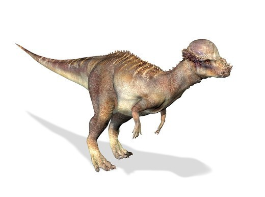 Stock Photo: 4239R-7888 3D rendering of a Pachycephalosaurus dinosaur.