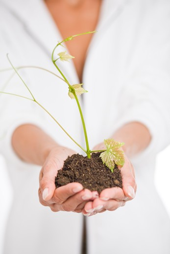 Woman plant stem : Stock Photo
