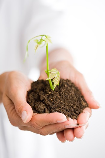 Stock Photo: 4252-17247 Woman plant stem