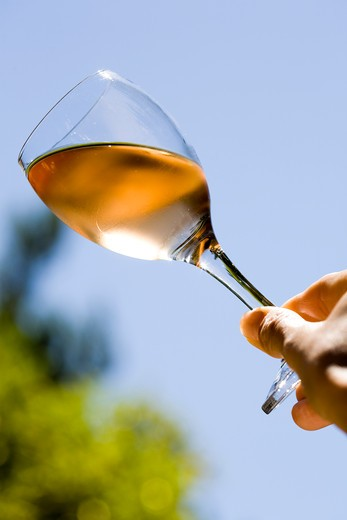 Stock Photo: 4252-17560 Rose wine glass