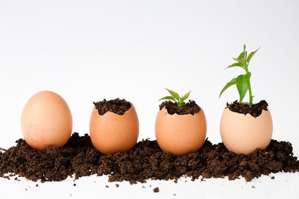 Stock Photo: 4252-22225 Eggs blades shells