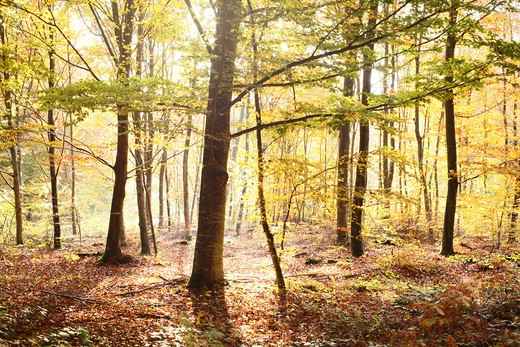 Stock Photo: 4252-22698 Autumn forest