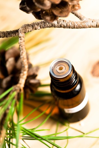 Stock Photo: 4252-24614 Essential oil branch pine