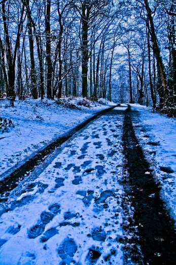 Stock Photo: 4252-34948 Landscape snow nature