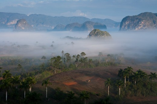 Fog hovers over fields in Vinales valley with steep-sided limestone mountains (mogotes) of Vinales National Park,Vinales, Pinar del Rio, Cuba, Caribbean : Stock Photo