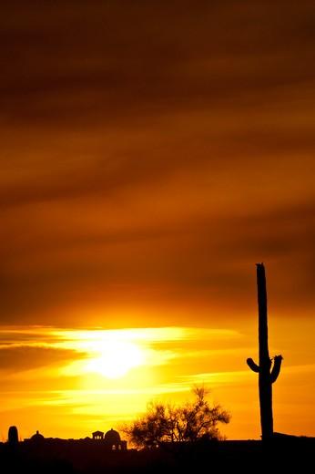 USA, Arizona, Tucson, Sunset with silhouettes of cacti : Stock Photo