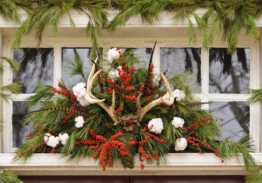 Stock Photo: 4260-1383 Handmade Christmas decorated wreaths hanging from a window, Williamsburg, Virginia, USA