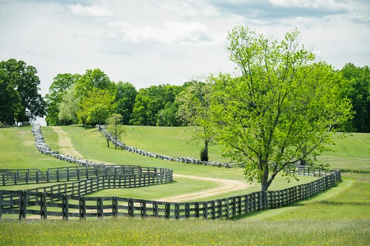 Stock Photo: 4260-1496 Old fence along dirt country road goes off into the distance among the trees and fields, Appomattox Court House National Historical Park, Appomattox, Virginia, USA