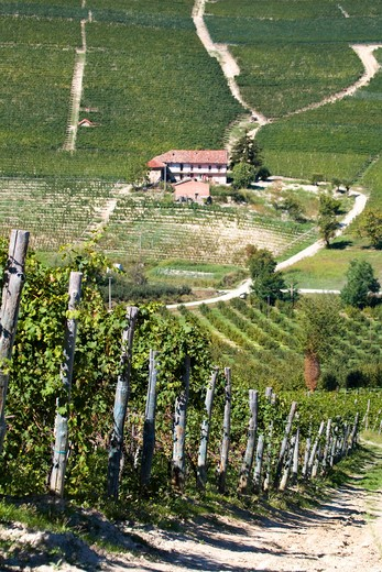 Vineyards, Barolo, Langhe, Piedmont, Italy : Stock Photo