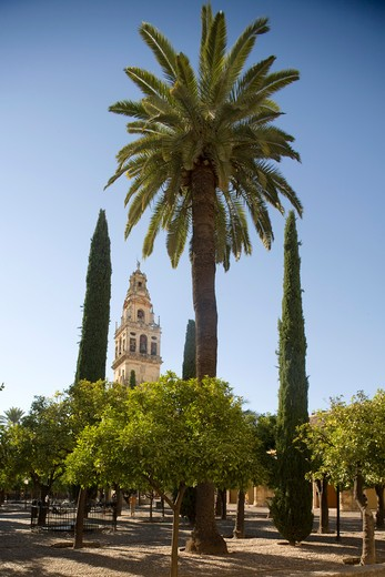 Stock Photo: 4261-100437 Torre Alminar, Cordoba, Andalusia, Spain, Europe