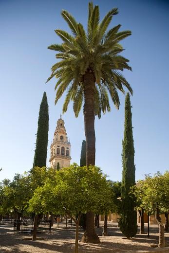 Torre Alminar, Cordoba, Andalusia, Spain, Europe : Stock Photo