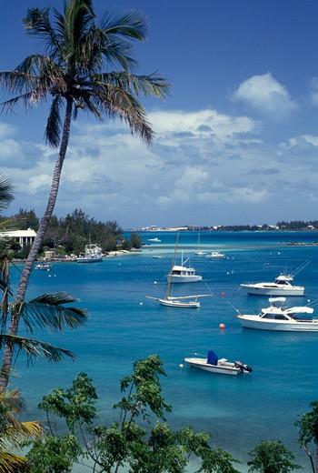 Stock Photo: 4261-14158 Mangrove Bay, Bermuda, Atlantic Ocean, Central America