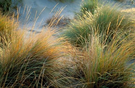 dune detail, les saintes maries de la mer, france : Stock Photo