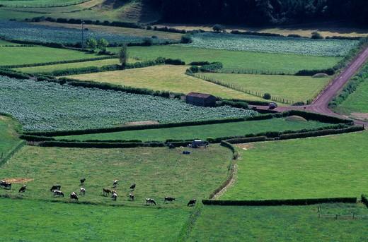 furnas: meadows, sao miguel, portugal : Stock Photo