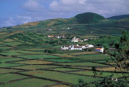 raminho: country, terceira, portugal : Stock Photo
