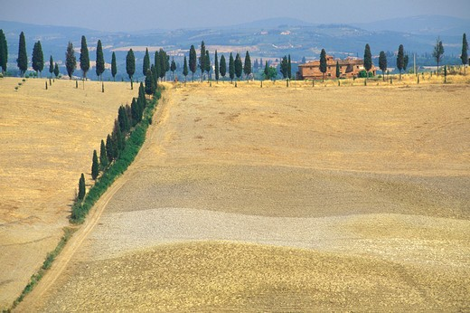 typical landscape, crete senesi, Italy : Stock Photo