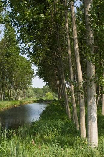 marsh, pellegrina, italy : Stock Photo