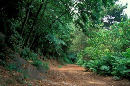 fossa delle felci mountain reserve, aeolian salina, Italy : Stock Photo