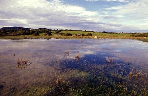 Irrigation field, Aglientu, Sardegna, Italy. : Stock Photo