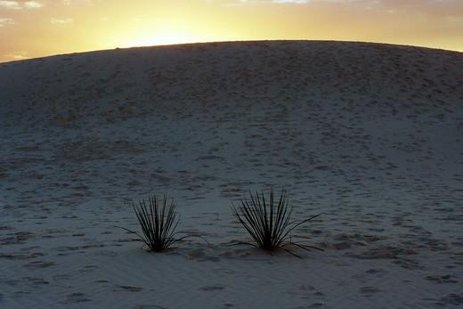 White Sands, New Mexico, USA : Stock Photo
