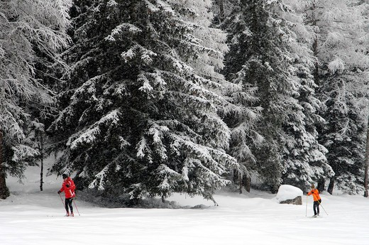 Cross Country sking while snowing, Vallunga, Gardena Valley, Dolomiti, Alto Adige, Bolzano province, Italy : Stock Photo