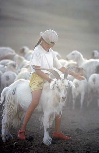 Girl riding a Cashmere goat, Mongolia, Asia : Stock Photo