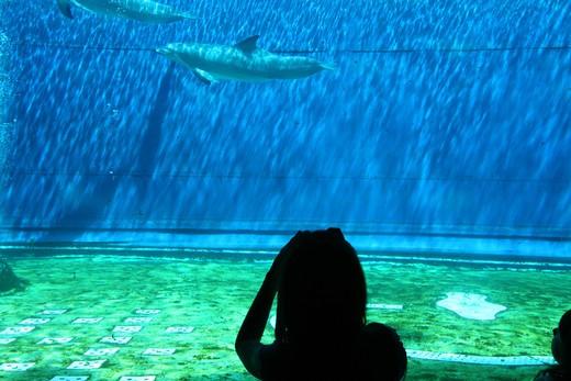 Stock Photo: 4261-38498 The Aquarium of Genoa, dolphins tank, Genoa, Ligury, Italy