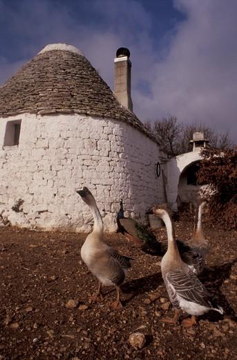 Masella farm, Martina Franca, Val d'Itria, Puglia, Italy : Stock Photo