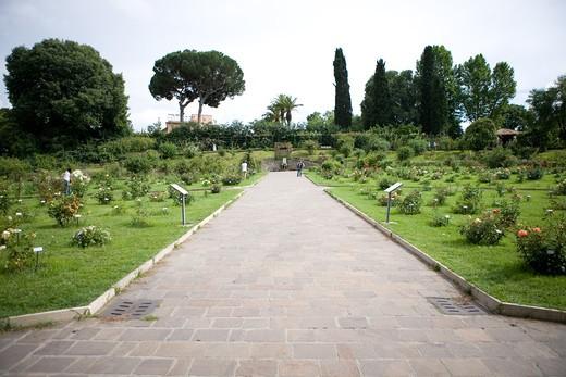 Rose garden, Rome, Lazio, Italy : Stock Photo