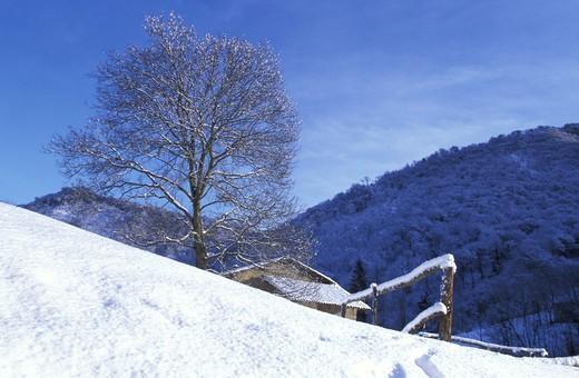 Welnut with snow and farmstead, Valsassina, Lombardy, Italy : Stock Photo