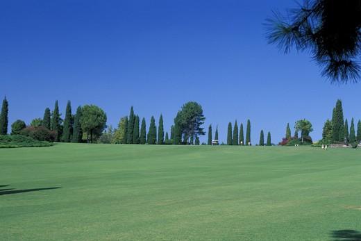 Cypresses in Sigurtà park garden, Valeggio sul Mincio, Veneto, Italy : Stock Photo