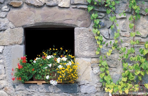 Stock Photo: 4261-61896 Window with petunias, pelargonium and bidens