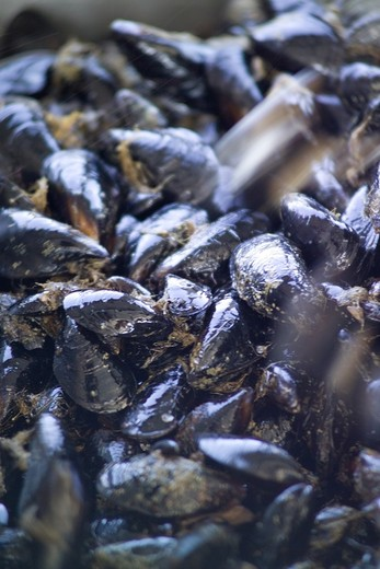 Stock Photo: 4261-6234 Mussel farming, Baia di Bacoli, Gulf of Pozzuoli, Campania, Italy