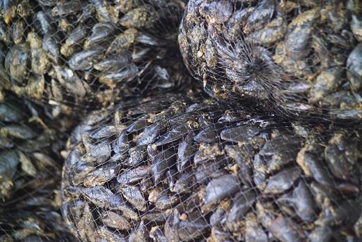 Mussel farming, Baia di Bacoli, Gulf of Pozzuoli, Campania, Italy : Stock Photo