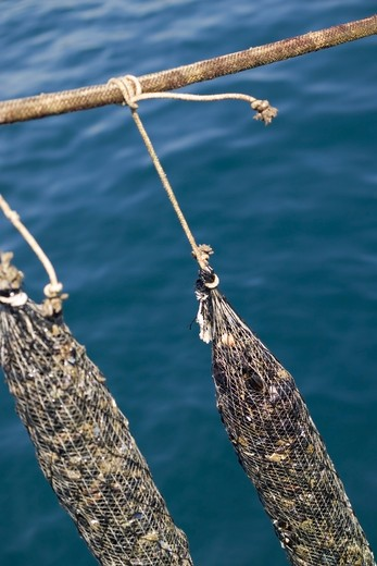 Stock Photo: 4261-6243 Mussel farming, Baia di Bacoli, Gulf of Pozzuoli, Campania, Italy