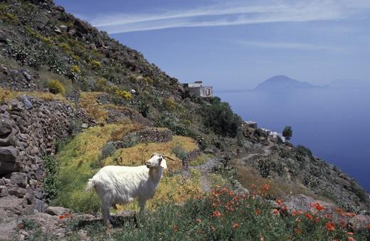 Landscape, Alicudi Island, Sicily, Italy : Stock Photo