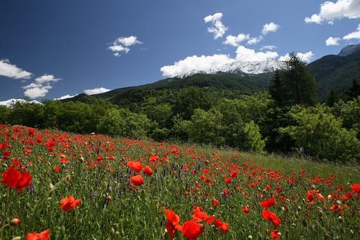 Landscape, Valle dei Mocheni, Trentino Alto Adige, Italy : Stock Photo