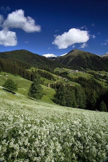 Landscape, Surroundings of Proves, Alta Valle di Non, Trentino Alto Adige, Italy : Stock Photo