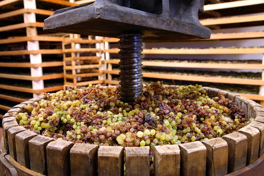 Vin Santo first pressing, Cantina di Toblino cellar, Sarche, Trentino Alto Adige, Italy : Stock Photo