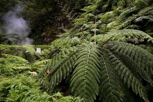 Stock Photo: 4261-76913 Chalybeate springs, Caldeira Vehla, Sao Miguel Island, Azores, Portugal, Europe