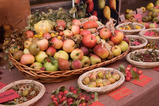 Exibithion of old fruits, Guastalla, Emilia Romagna, Italy, Europe : Stock Photo