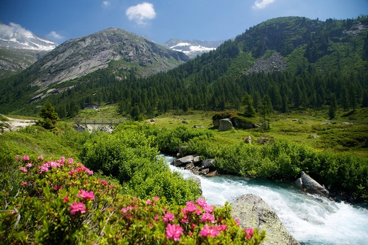 Chiese river in Adamello-Brenta Natural Park, Fumo Valley, Val di Daone, Valli Giudicarie, Trentino Alto Adige, Italy, Europe : Stock Photo