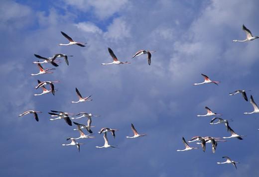Stock Photo: 4261-81044 Saltwork sky, Nubia, Sicily, Italy