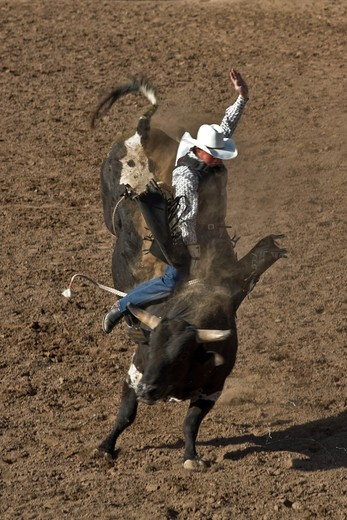 Rodeo, Buckeye, Maricopa County, Arizona, United States of America, North America  : Stock Photo