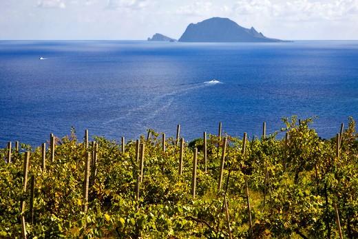 Typical vineyard, Salina Island, Messina, Sicily, Italy, Europe : Stock Photo