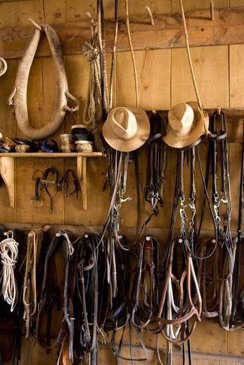 Hats and straps, Maremma Natural Park, Tuscany, Italy : Stock Photo