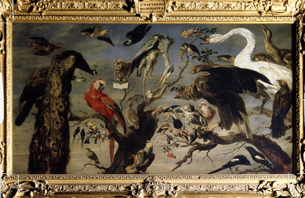 Stock Photo: 4266-11483 Various species of birds by Frans Snyders, oil on canvas, 1630-1640, 1579-1657, Russia, St Petersburg, State Hermitage, 136, 5x240