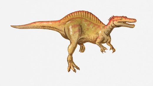 Illustration of a Spinosaurus, Cretaceous period : Stock Photo